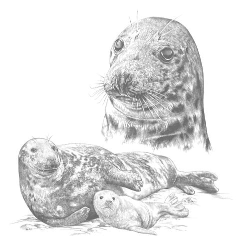 Seal drawing